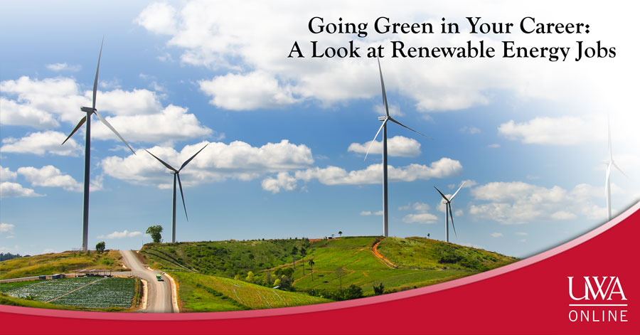 Going Green in Your Career: A Look at Renewable Energy Jobs